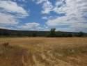 18145-Surface-Creek-Road-Cedaredge-CO-81413-12